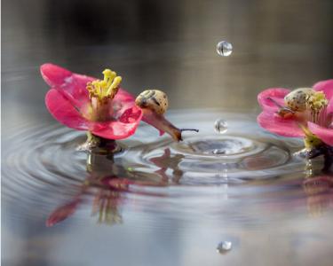 意好奇蜗牛探头围观水涡显呆萌