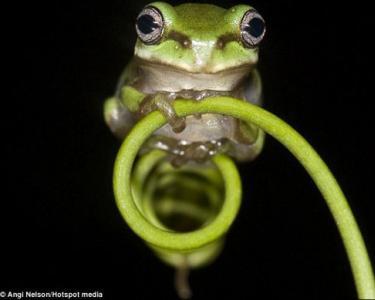 摄影师拍青蛙演杂技 各种特写令人眼花缭乱