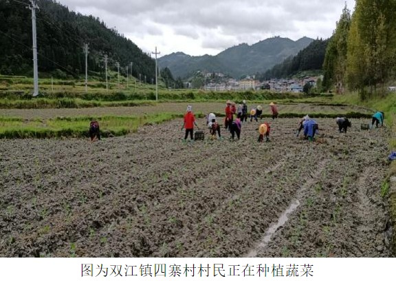 黎平:持续抓好秋冬种 促进农业增效、农民增收