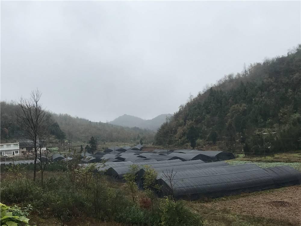 黔西县太来乡:种植羊肚菌  拓宽增收路