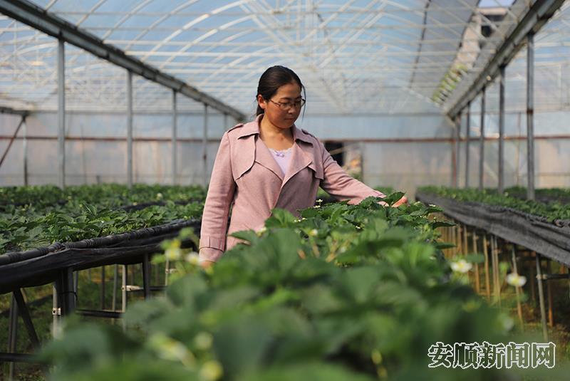 王法娟:外来媳妇领头雁 带领乡亲谋发展
