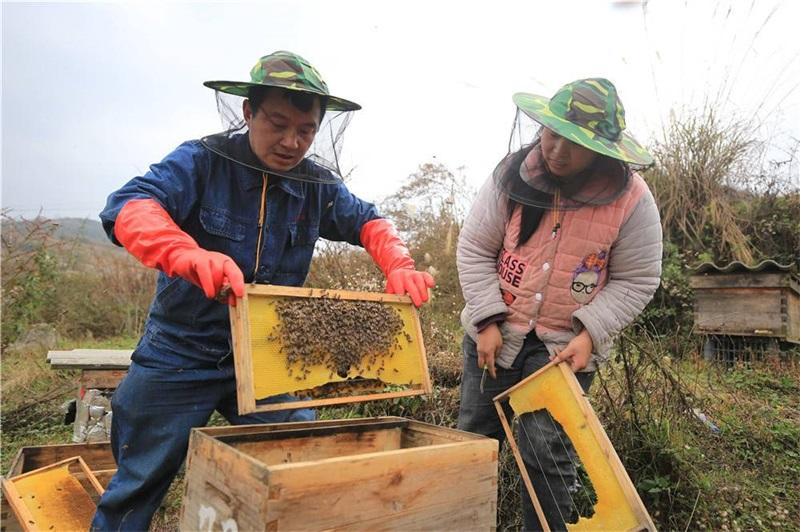 黔西县雨朵镇:蜂农春季管护忙