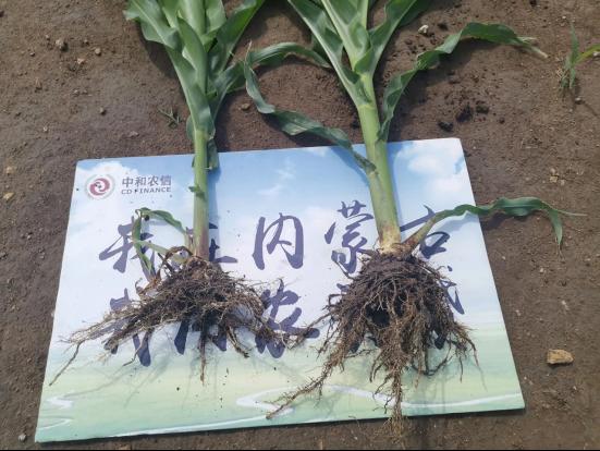 中和农信:为农服务,初心使然