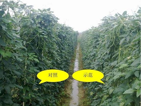 """中和农信:农服""""医生""""助力农户解决种植难题"""