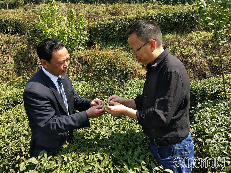 平坝:农技指导到茶园