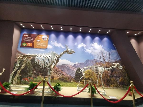 走,去中铁双龙镇看前景自然博物馆