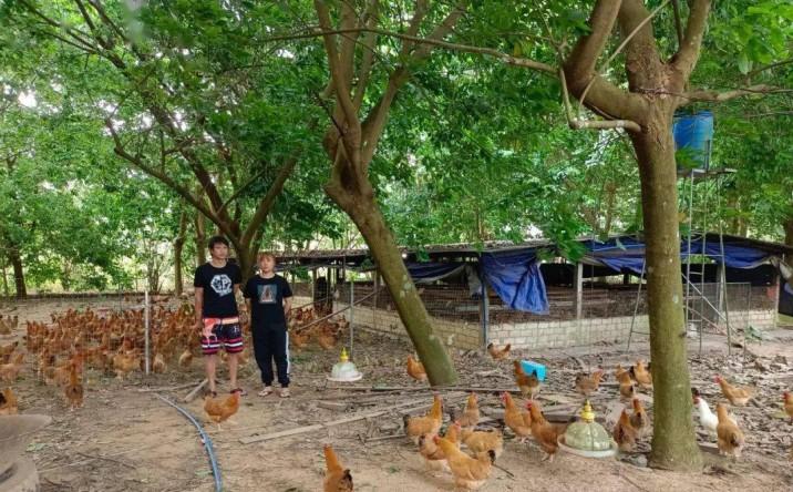 中和农信托起95后养鸡姑娘的致富梦