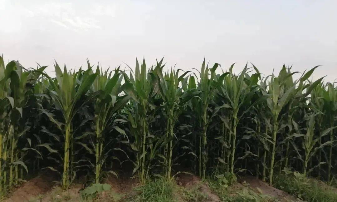 中和农信:选对化肥助丰收